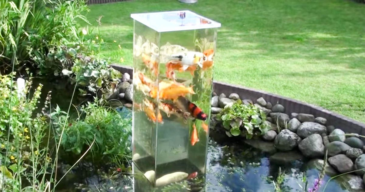A stunning look at fish tank towers that connect to ponds for Ponds 4 fish